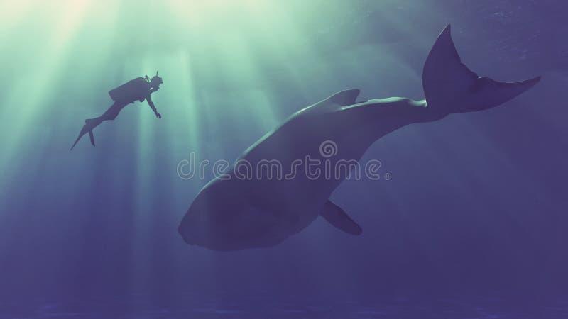 Le plongeur nage avec une baleine illustration de vecteur