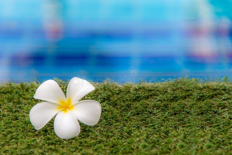 Le Plumeria fleurit la station thermale près de la piscine, détend et soin sain photo stock