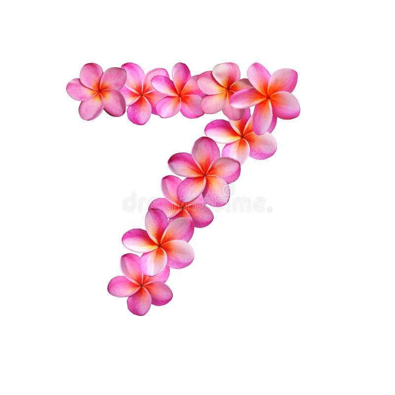 Le Plumeria rose fleurit le numéro sept illustration stock