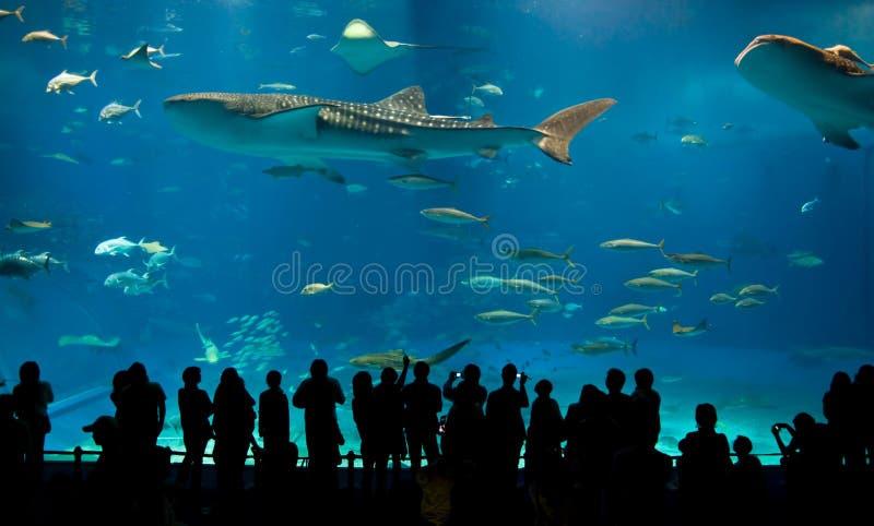 Le plus grand aquarium acrylique du monde image stock