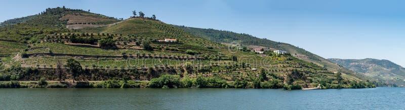 Le point de vue a tiré des vignobles en terrasse en vallée de Douro photo libre de droits