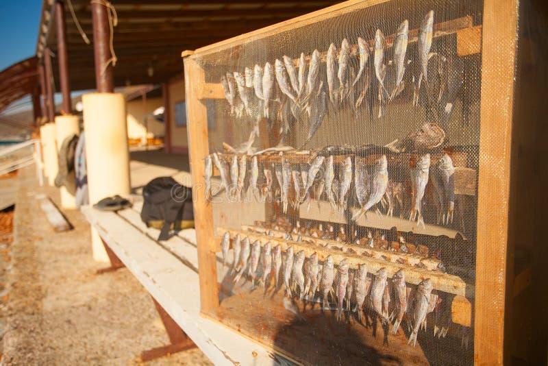 Le poisson est séché en soleil sur le fond de la mer images stock