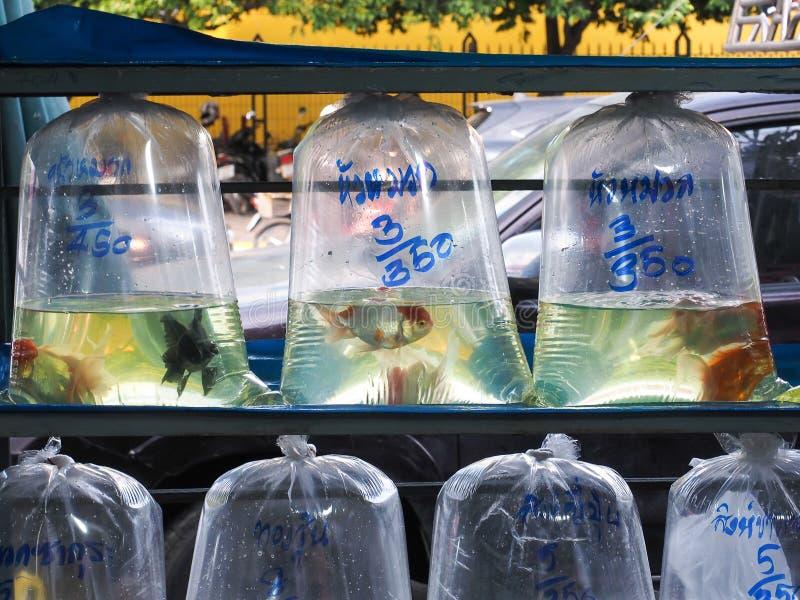 Le poisson rouge en air a rincé des sachets en plastique à vendre images stock
