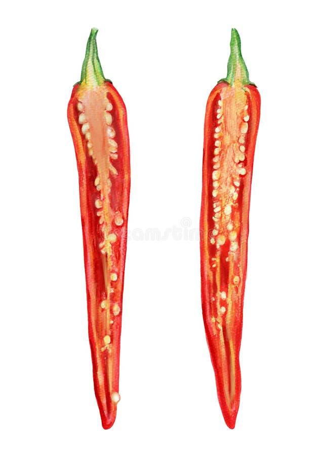 Le poivre de piment rouge frais d'aquarelle a coupé dans la moitié, graine d'isolement sur le fond blanc, illustration, faisant c images libres de droits