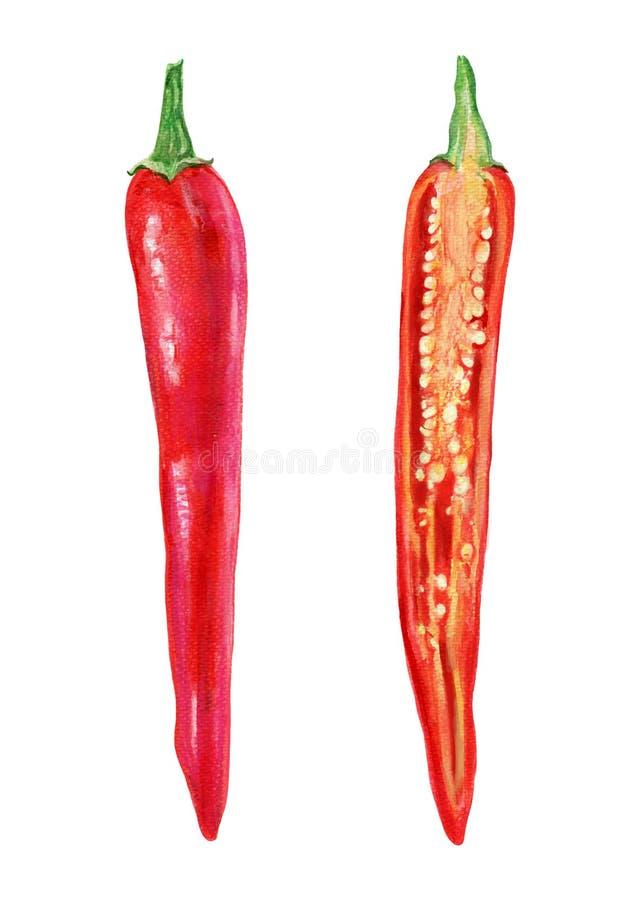 Le poivre de piment rouge frais d'aquarelle a coupé dans la moitié, graine d'isolement sur le fond blanc, illustration, faisant c photo libre de droits