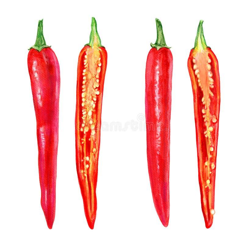 Le poivre de piment rouge frais d'aquarelle a coupé dans la moitié, graine sur le fond blanc, illustration, faisant cuire des ing images libres de droits