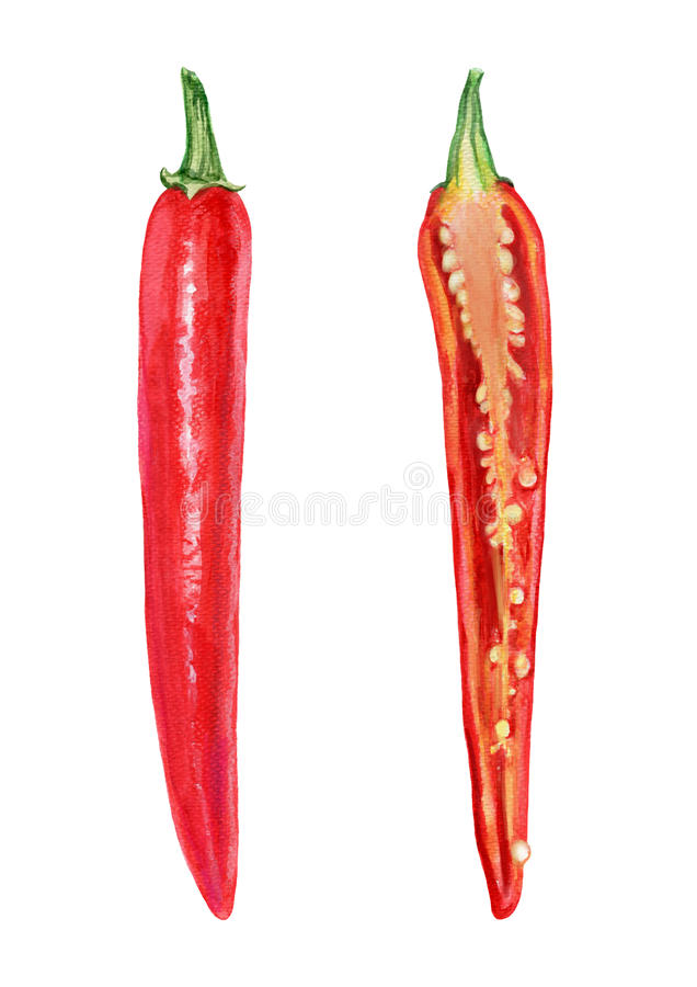 Le poivre de piment rouge frais d'aquarelle a coupé dans la moitié, graine sur le fond blanc, illustration, faisant cuire l'ingré image stock