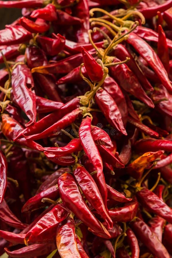 Le poivre de piment a séché la rangée de assaisonnement épicée de fruit entier de la base culinaire de conception de base de beau photographie stock libre de droits
