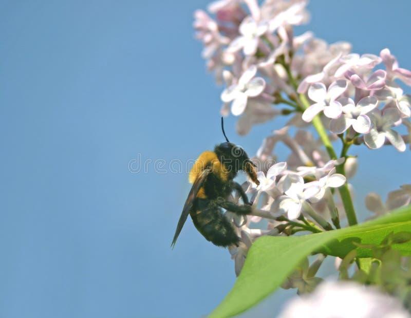 Le pollinisateur et pollinisés photos stock