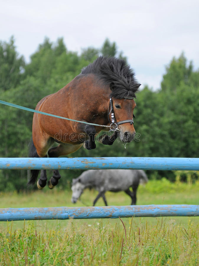 Le poney saute photo stock