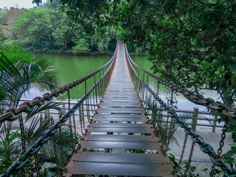 Le pont suspendu de câble du parc est de lac de Shenzhen photo stock