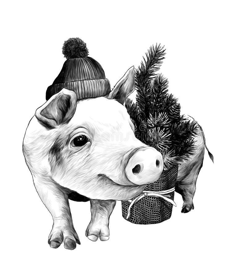 Le porc de Noël dans un chapeau chaud avec un pompon se tient près d'un petit arbre de Noël décoratif illustration stock