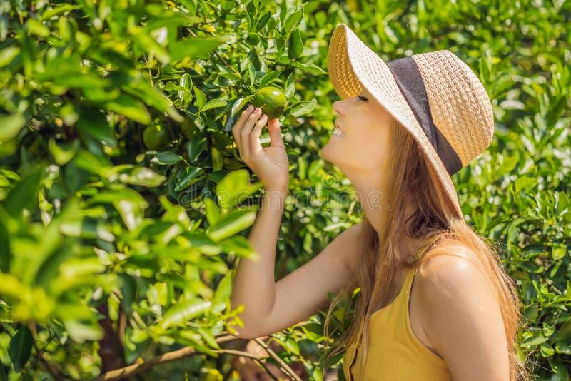 Le portrait de l'agriculteur attirant Woman est moisson orange dans la ferme organique, fille gaie dans l'émotion de bonheur tand image libre de droits