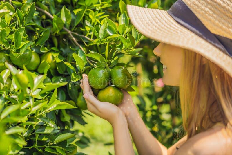 Le portrait de l'agriculteur attirant Woman est moisson orange dans la ferme organique, fille gaie dans l'émotion de bonheur tand photo stock