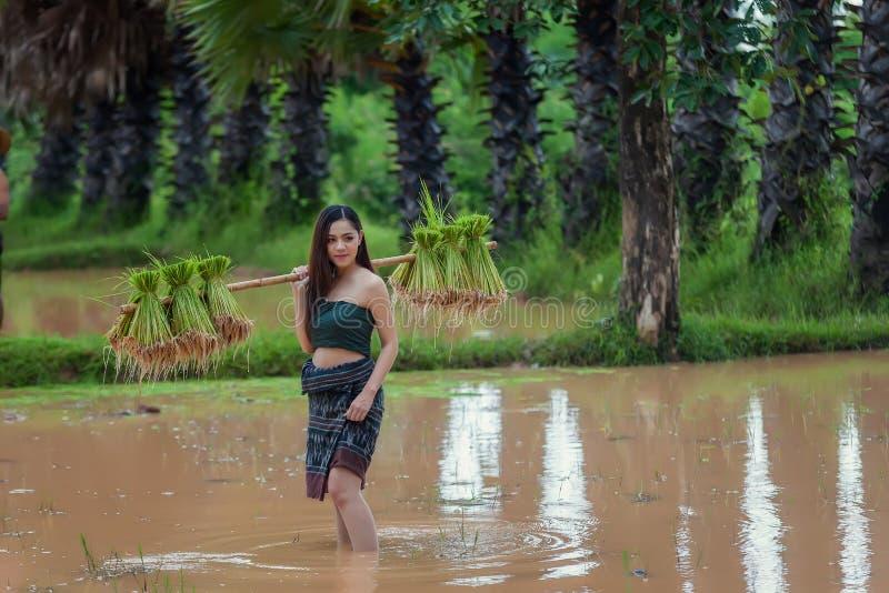 Le portrait de l'agriculteur féminin traditionnel asiatique labourent le fie de riz photo stock