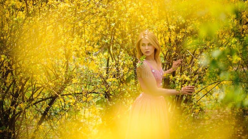 Le portrait de la jeune et belle femme blonde s'est habillé dans une robe rose se tenant près de l'arbre de floraison jaune images libres de droits