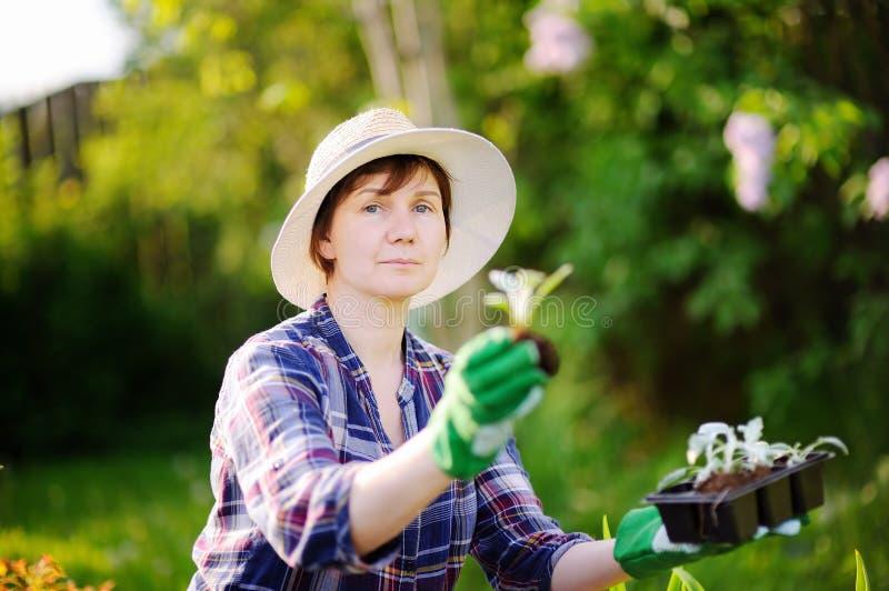 Le portrait du beau Moyen Âge de sourire/mûrissent/jardiniers féminins plus âgés photos libres de droits