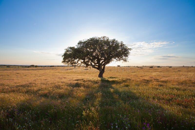 Le Portugal - nature photos libres de droits