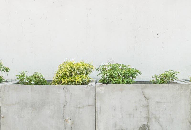 Le pot extérieur de ciment de plan rapproché avec la plante verte sur le vieux mur de ciment a donné au fond une consistance rugu images libres de droits