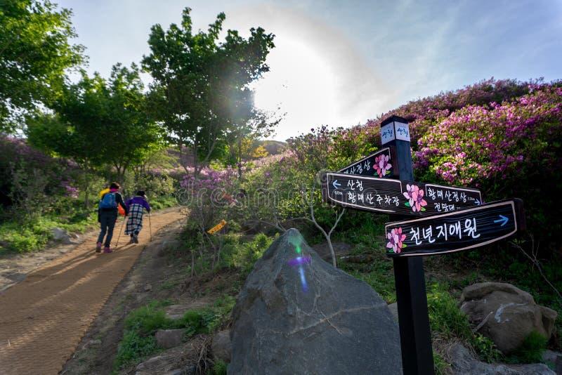 Le poteau en bois de guide placent dedans dans le parc de pays de Hwangmaesan avec des femmes plus âgées trimardant sur le chemin photo libre de droits