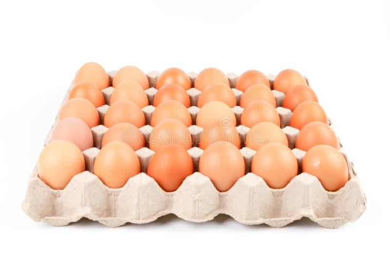 Le poulet brun cru Eggs dans la boîte de plateau de récipient de papier images libres de droits