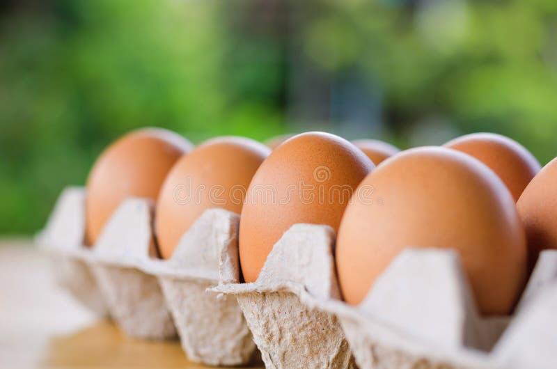 Le poulet cru en gros plan eggs dans la boîte à oeufs sur la table et le backgrou vert photographie stock