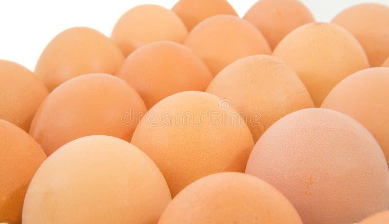 Le poulet Eggs II photo stock