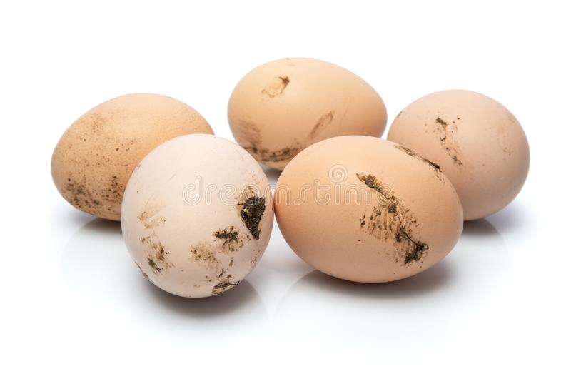 Le poulet frais et sale eggs sur le fond blanc avec la réflexion, nourriture saine faite maison image libre de droits