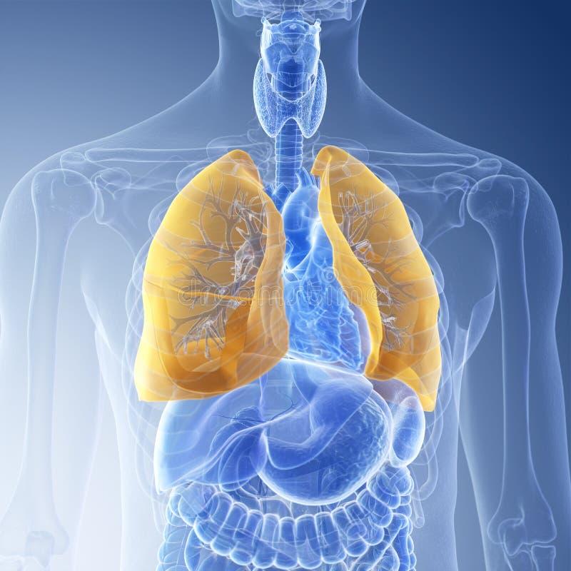 Le poumon illustration stock