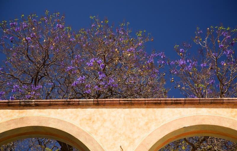 Le pourpre fleurit le mur blanc Queretaro Mexique d'Adobe photos stock