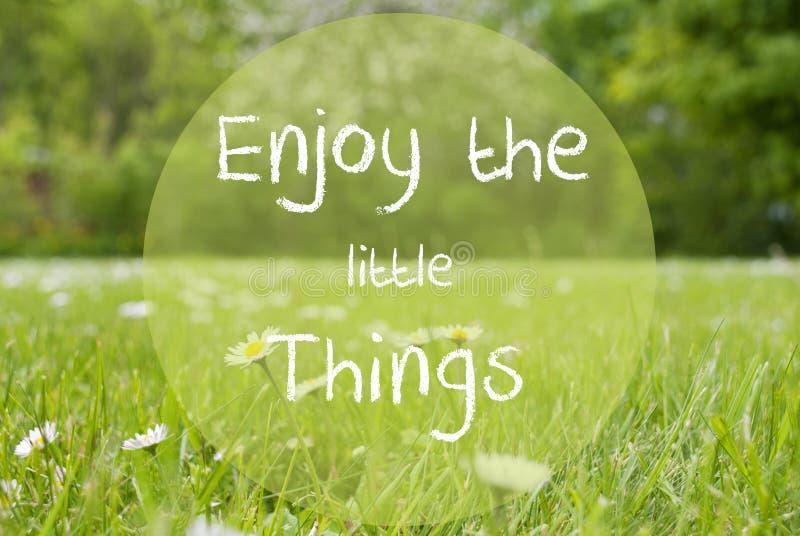 Le pré de Gras, Daisy Flowers, citation apprécient les petites choses images stock