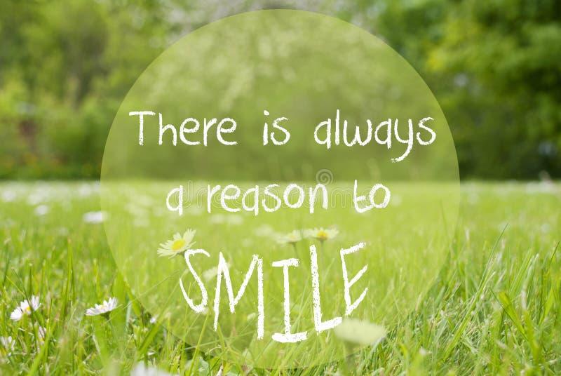 Le pré de Gras, Daisy Flowers, citent toujours une raison de sourire image stock