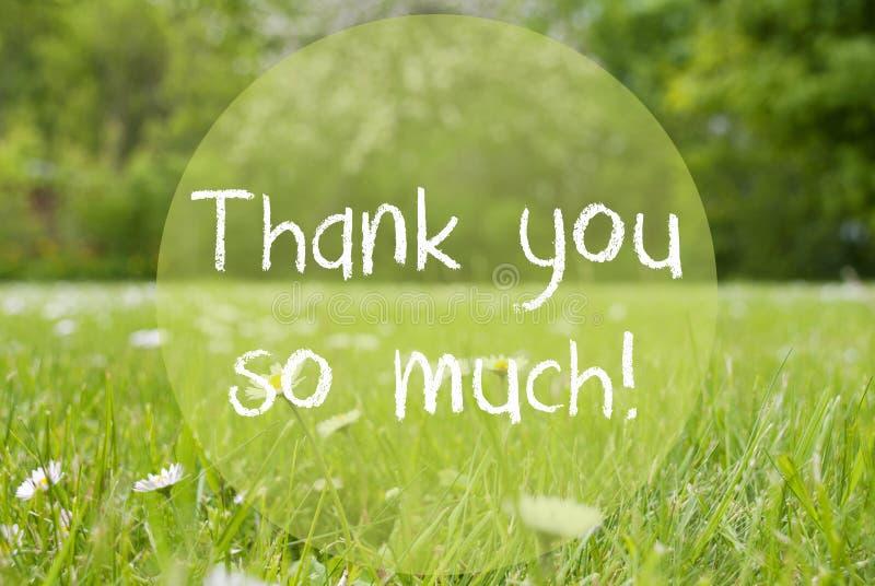 Le pré de Gras, Daisy Flowers, texte vous remercient tellement photos stock