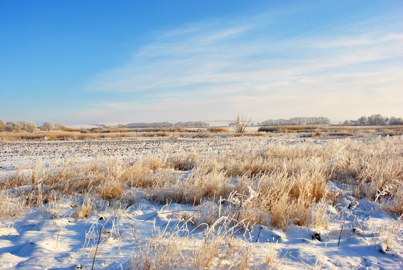 Le premier gel dans le domaine, blanc a défraîchi l'herbe sous la ligne de neige et d'arbres dans l'horizon images stock