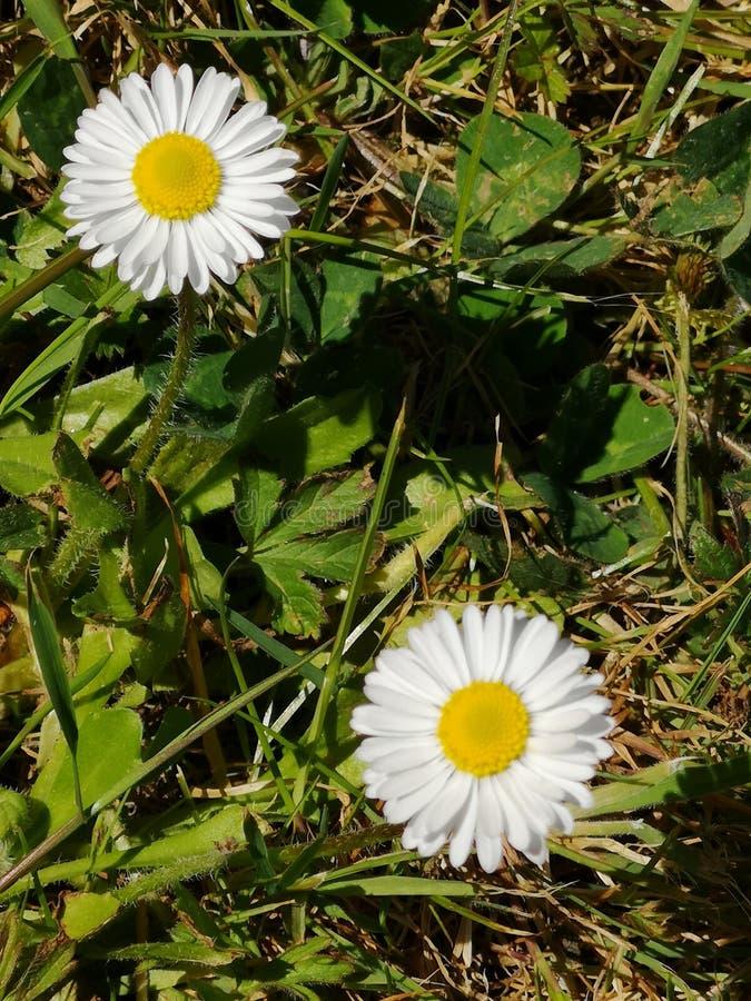 Le printemps… a monté des feuilles, fond naturel photos stock