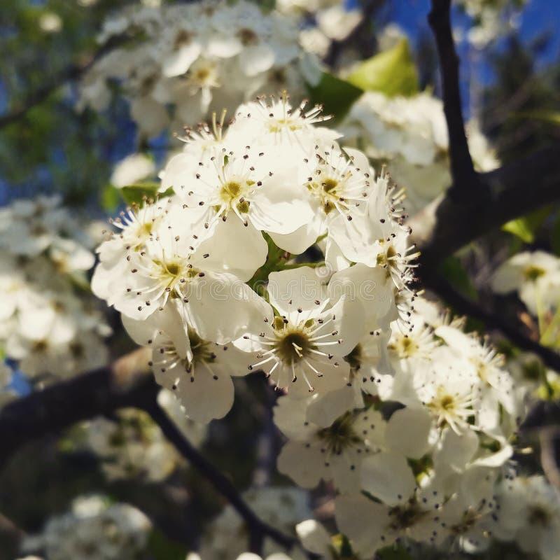 Le printemps… a monté des feuilles, fond naturel image libre de droits