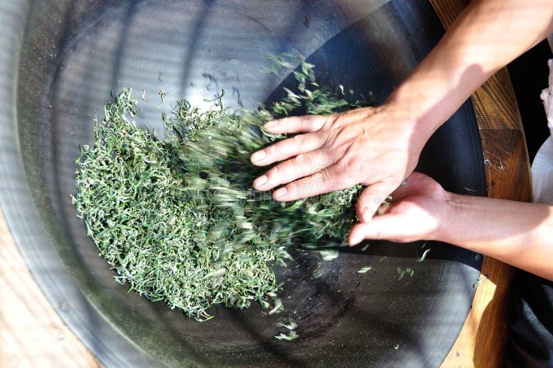 Le procédé de fabrication du thé images libres de droits
