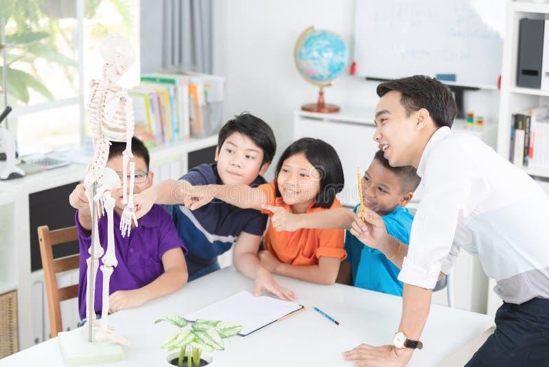 Le professeur asiatique explique une structure de corps humain au petit élève photographie stock