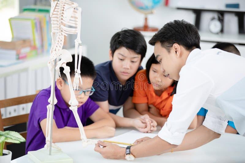 Le professeur asiatique explique une structure de corps humain au petit élève image libre de droits
