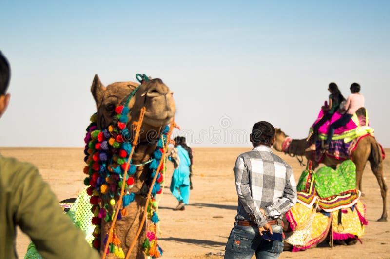 Le propriétaire de berger de chameau se tient près du chameau coloré décoré au Goudjerate Inde images libres de droits