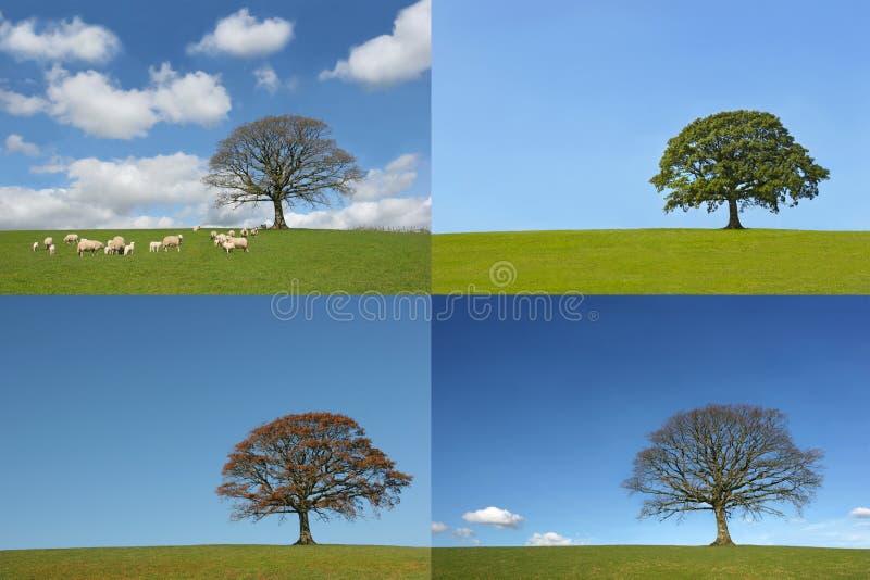 Le quattro stagioni immagine stock libera da diritti