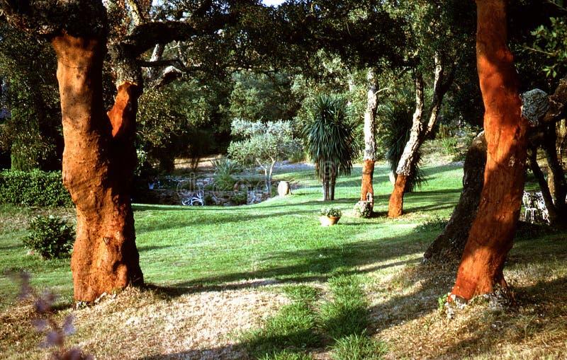 Le querce da sughero in un Provencal fanno il giardinaggio con la dracaena nei precedenti immagine stock libera da diritti