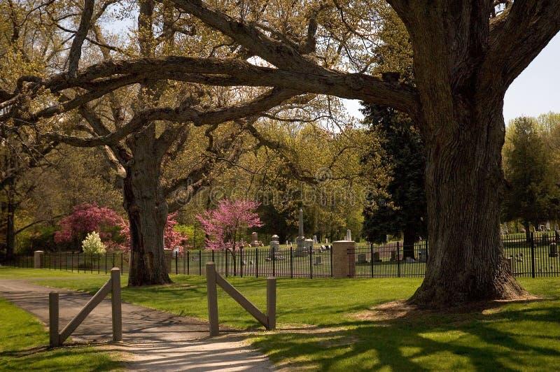 Le querce maestose custodicono un cimitero fotografia stock libera da diritti