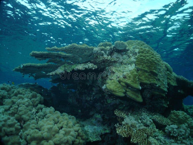 Le récif photo stock