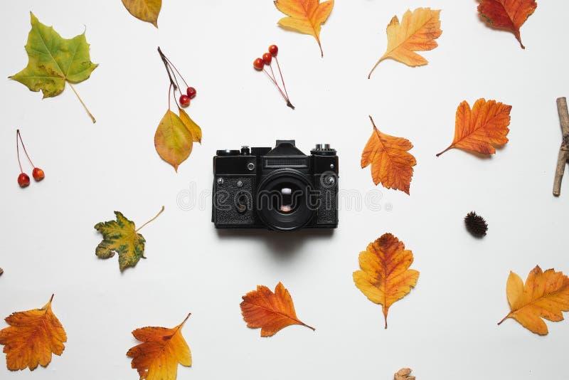 Le rétro appareil-photo de vintage et le cadre floral de la chute d'automne part avec les baies et la feuille d'érable rouges Dép image libre de droits