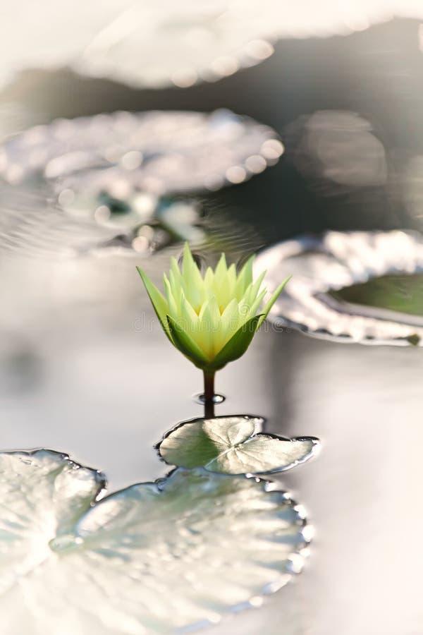 Le rétro effet de vintage a filtré l'image de style de hippie du lotus asiatique photographie stock libre de droits