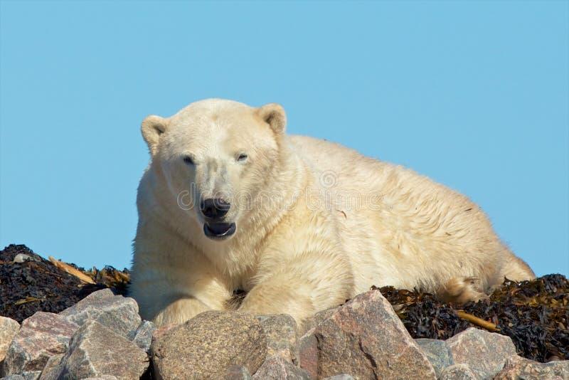 Le réveil polaire concernent les roches photographie stock libre de droits