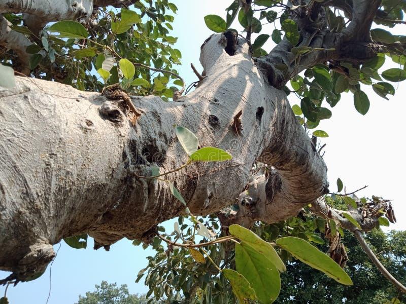 Le radici dell'albero scortecciano la struttura, carta da parati del fondo della creazione della natura fotografia stock libera da diritti