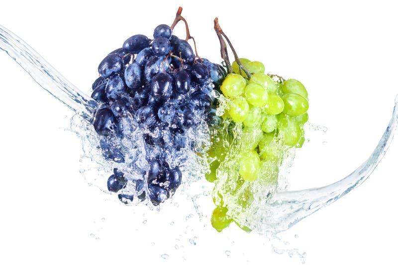 Le raisin bleu et vert avec l'éclaboussure de l'eau a isolé le blanc photographie stock libre de droits