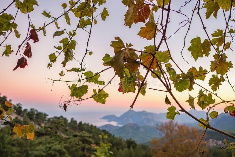 Le raisin part avec un paysage méditerranéen de côte au fond au coucher du soleil en Turquie photographie stock libre de droits